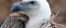 В Ливане птицу заподозрили в шпионаже