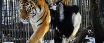 Юрист из Новосибирска обвинил животных в пропаганде гомосексуализма