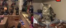 Кошка разгромила бутик в аэропорту Шереметьево