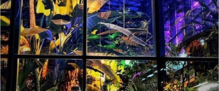 19 и 20 марта — открытки из орхидей, лекции, «Тропическая зима» в «Аптекарском огороде»