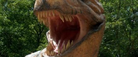 Ученые всего мира занялись выводом кур-динозавров