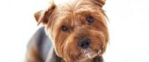 Десять лет в австралийской тюрьме — за собственных псов — могла провести супруга известного актёра