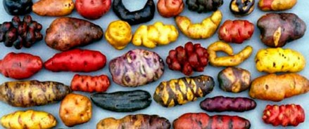 5 фактов о картошке или Что нам нужно знать о крахмале