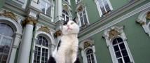 Веселый выходной ожидает жителей Петербурга
