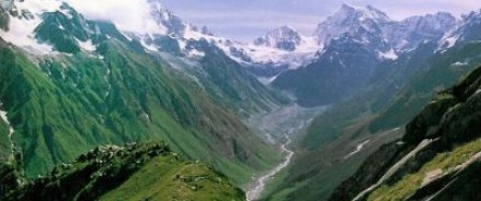 Государственные службы Индии выделили деньги на поиски чудодейственной травы