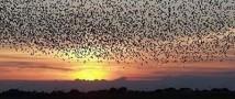 Скорость полета птичьей стаи зависит от ее величины