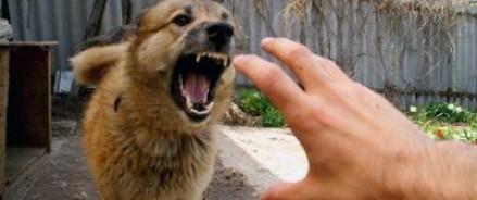 В мэрии Москвы подписано распоряжение о введении карантина, связанного с бешенством животных