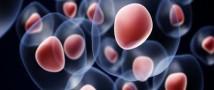 Стволовые клетки помогут ученым бороться с проблемами кровотока