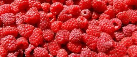 Малина: как посадить ягоду и где приобретать рассаду?
