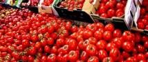 В Турции заявили, что устали ждать снятия ограничений на ввоз томатов в РФ, и готовы на контрмеры