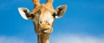 В Московском зоопарке открылась фотовыставка «Экокультурный туризм с Московским зоопарком в Подмосковье».