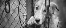 За жестокое обращение с животными можно будет оказаться за решеткой