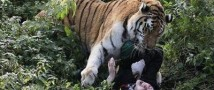 Сотрудница калининградского зоопарка, на которую напал тигр, доставлена в БСП