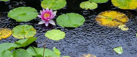 «Аптекарский огород» станет первым ботаническим садом в России с системой сбора дождевой воды