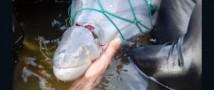 ФСБ займется не только российскими, но и украинскими браконьерами, бесчинствующими в Азовском море