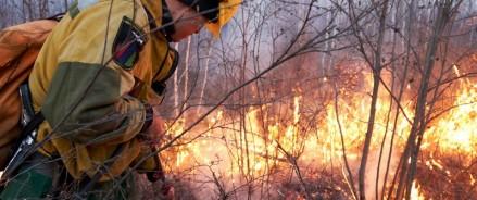 Авиалесохрана: предварительный прогноз пожарной опасности в лесах на июнь 2018