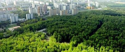 На формирование «зеленого пояса» вокруг Красноярска выделено 9 миллионов рублей