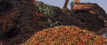 Россельхознадзор уничтожил более 6 тонн украинских томатов в Псковской области