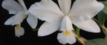 Более 30 редких орхидей подарил «Аптекарскому огороду» Московский урбанистический форум