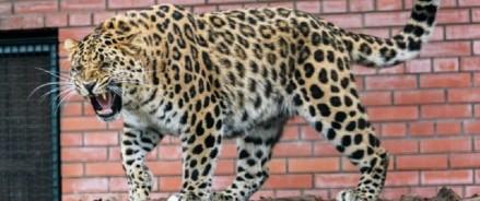 Центр воспроизводства редких видов Московского зоопарка откроет свои двери для туристов