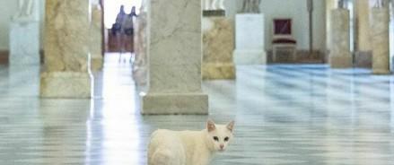 Эрмитажные котята готовы к празднованию Дня эрмитажного кота