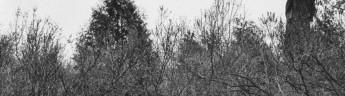 Центр фотографии имени братьев Люмьер представляет персональную выставку Геннадия Бодрова