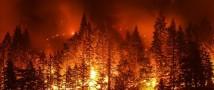 Беспрецедентные пожары в Сибири, петиция собрала более 300 000 подписей