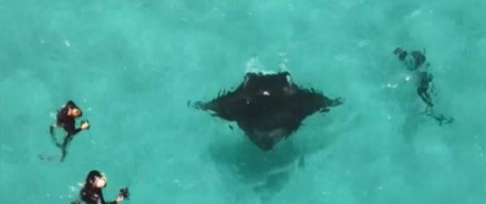 Морской дьявол приплыл за помощью к драйверам, видео