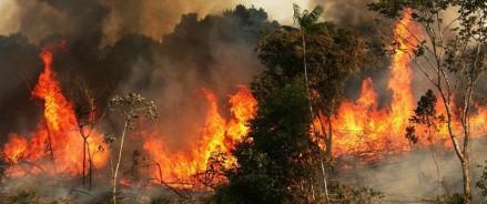 Лидеры G7 близки к согласованию плана помощи Бразилии, в связи с пожарами