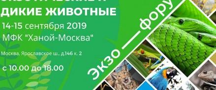 Экзофорум 2019: выставка экзотических и диких животных