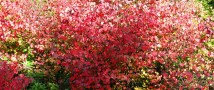 Карамельное Дерево Добра посадят 12 сентября в «Аптекарском огороде»