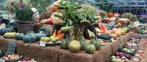 Коноплю, водоросли и мёд представят с 7 сентября в «Аптекарском огороде»