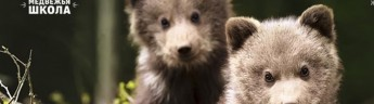 Цифровая премьера проекта «Медвежья школа» в приложении «Моя Планета»
