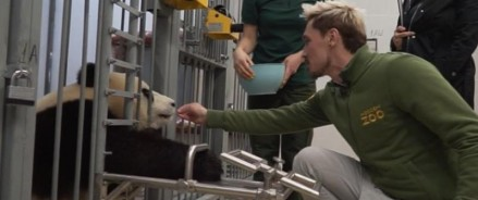 Московский зоопарк запускает просветительский видеоблог. Первый гость — Дима Билан.