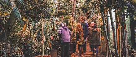Урожай кофе зреет в тропиках «Аптекарского огорода»