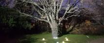 вёздная полянка исполнения желаний появилась в «Аптекарском огороде»