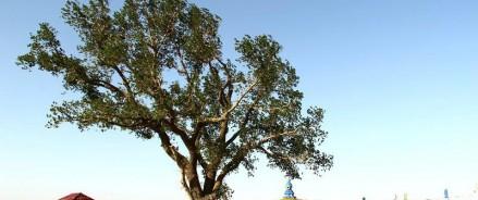 Главным деревом страны 2019 года на конкурсе «Российское дерево года» стал «Одинокий тополь» из Республики Калмыкия!