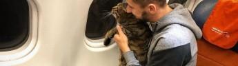 Аэрофлот: «контрабандист толстого кота» лишился бонусов