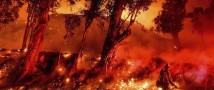 Австралийские лесные пожары: объявлено чрезвычайное положение