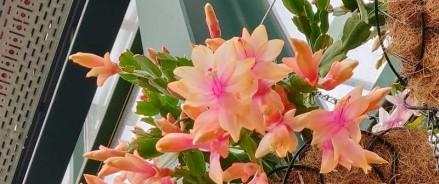 Денежные деревья и каменные розы расцвели в «Аптекарском огороде»