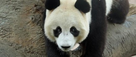 Московский зоопарк установит новые камеры в павильоне «Фауна Китая»