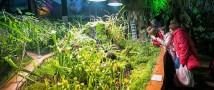 Крупнейший в России Фестиваль орхидей, хищных растений и суккулентов «Тропическая зима» в «Аптекарском огороде»