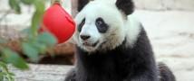 В зоопарке ждут подарки: принеси подарок и попади в зоопарк бесплатно