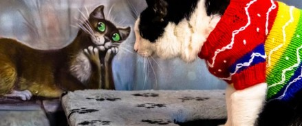 Как стать волонтером Google? Котики расскажут!