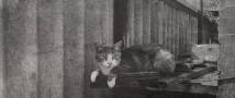 Кудровские школьники создали инсталляцию про котов, спасавших Ленинград в блокаду