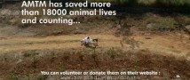 Приложение Likee запустило инициативу по защите животных #DanceForAnimal