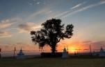 Поддержим российский тополь на конкурсе «Европейское дерево года — 2020»