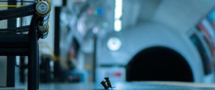 Фотография мышей, ссорящихся на платформе метро, получает престижную премию