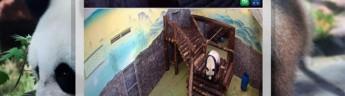 Московский зоопарк приглашает на онлайн-мероприятия