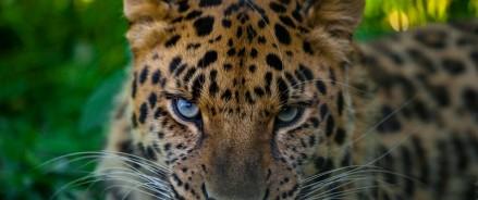 Московский зоопарк запускает акцию «8 марта в леопарде»